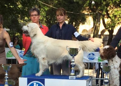 Ch Pinkerly Tom Jones TOP DOG 2014