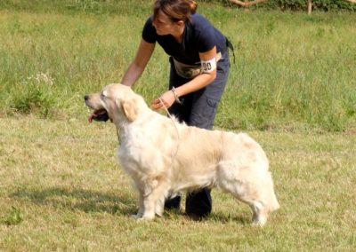 bodhitorba2010